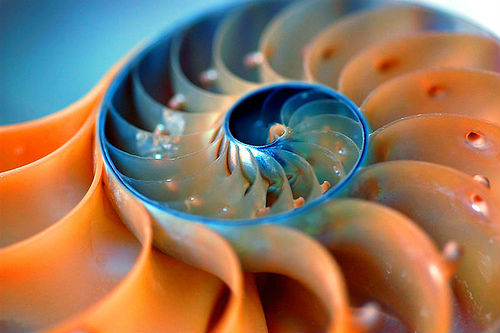 fibonacci-nautilus